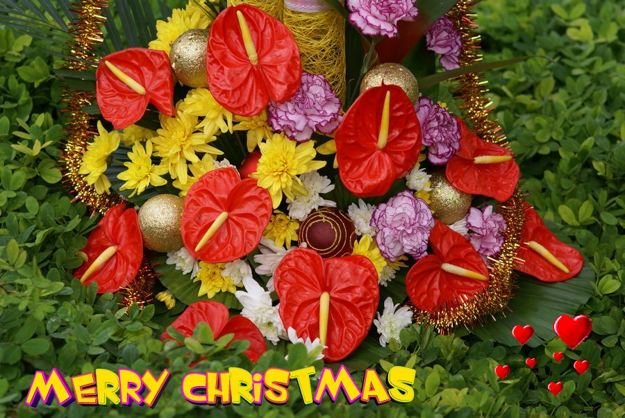 christmas_flower_card- 50 Most Stylish printable greeting cards