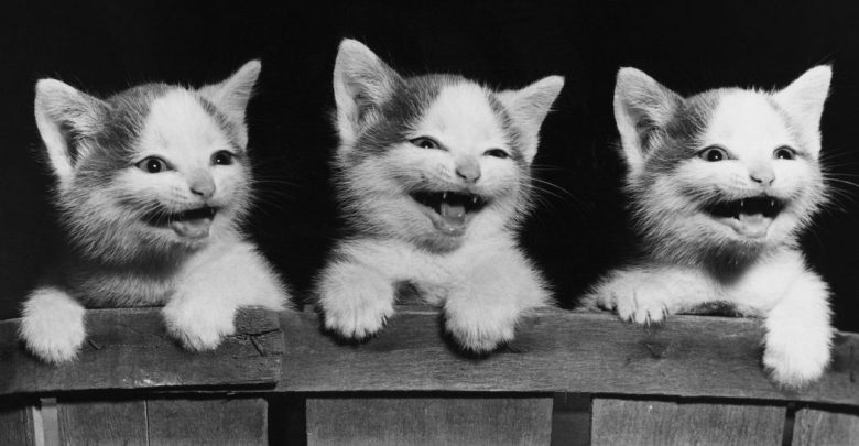 Photo of Top Funniest Cats in The World…