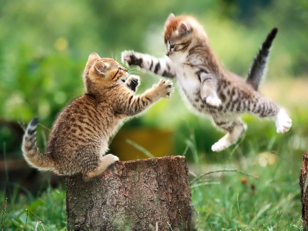 funny-cat-fight 10 Best Amazing Videos For Cats