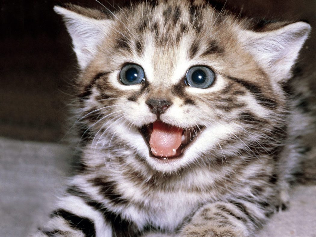 funny-cat1 10 Best Amazing Videos For Cats