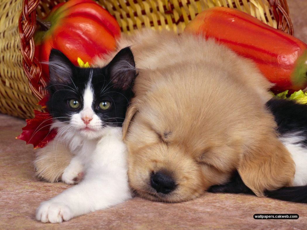funny-cats-and-dogs-2 10 Best Amazing Videos For Cats