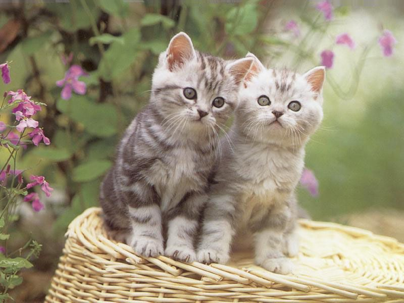 funny-cats-and-kittens-wallpapers-12 10 Best Amazing Videos For Cats