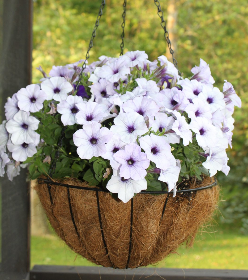 hanging-basket How To Make Plants A Part Of Your Home Decoration?