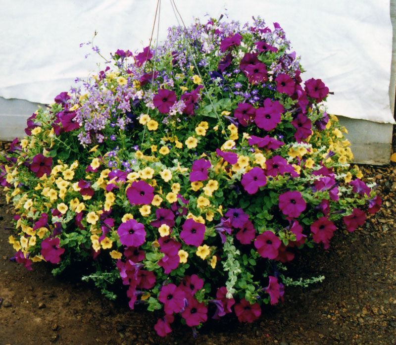 hanging_basket3 How To Make Plants A Part Of Your Home Decoration?
