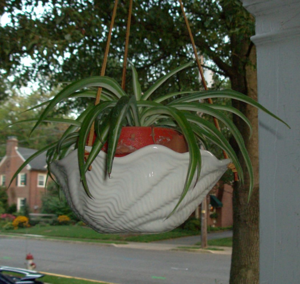 il_fullxfull.369302849_73g0 How To Make Plants A Part Of Your Home Decoration?