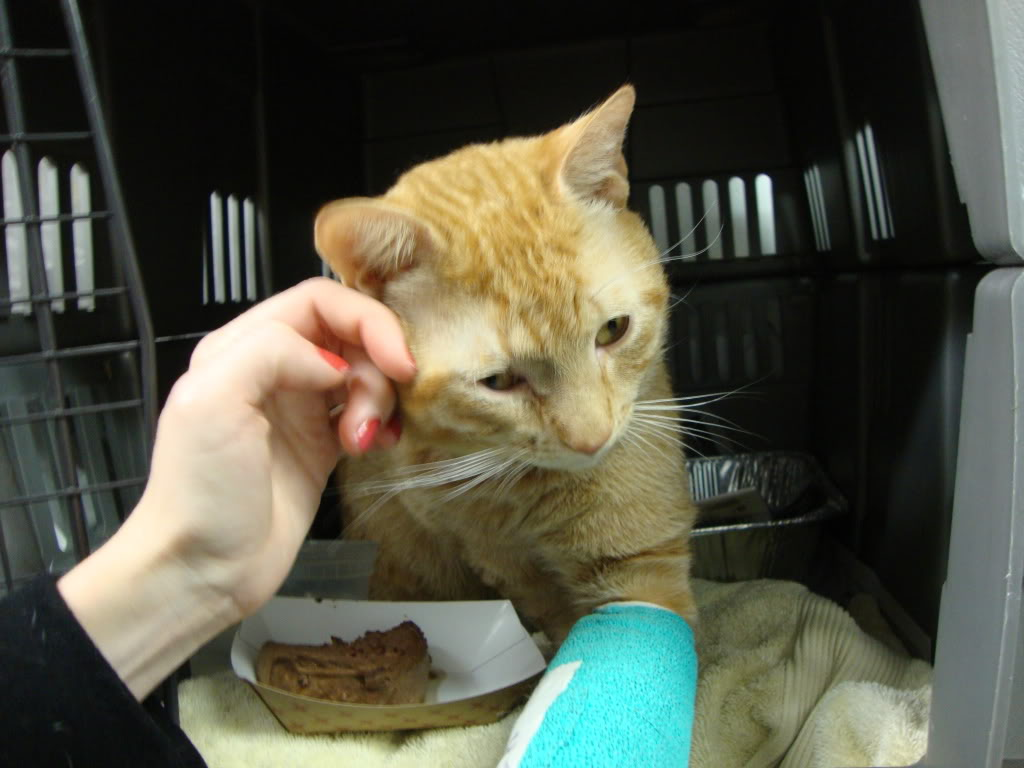 injured-cat First Aid for Your Cat