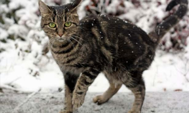 large Can Grumpy Cat Speak Or Not ?