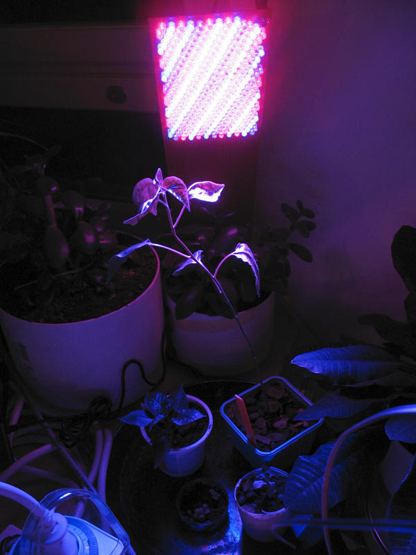 led_plant_light_0 How Artificial Plant Lights Will Help Growing Your Plants?