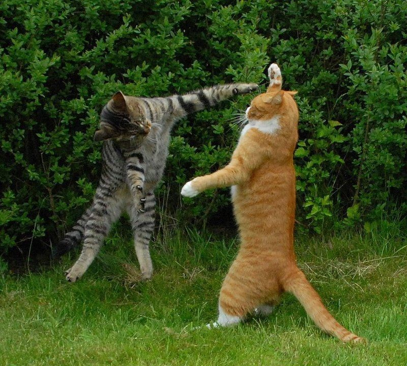 martial-arts-cat Top Funniest Cats in The World...