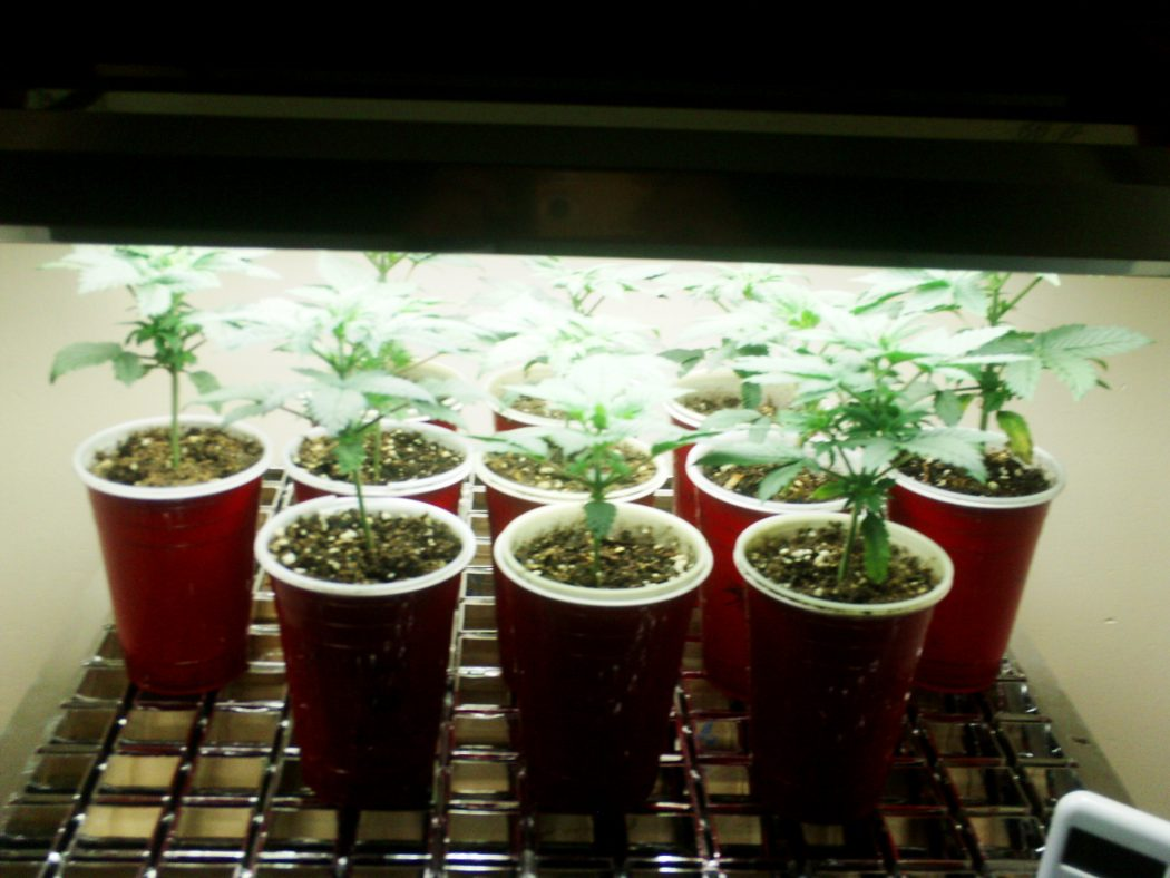 new-old-001 How Artificial Plant Lights Will Help Growing Your Plants?