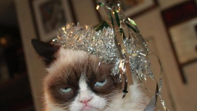 Photo of Can Grumpy Cat Speak Or Not ?