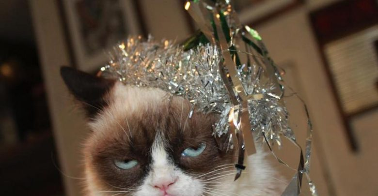 Photo of Can Grumpy Cat Speak Or Not ?