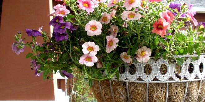 plants furniture