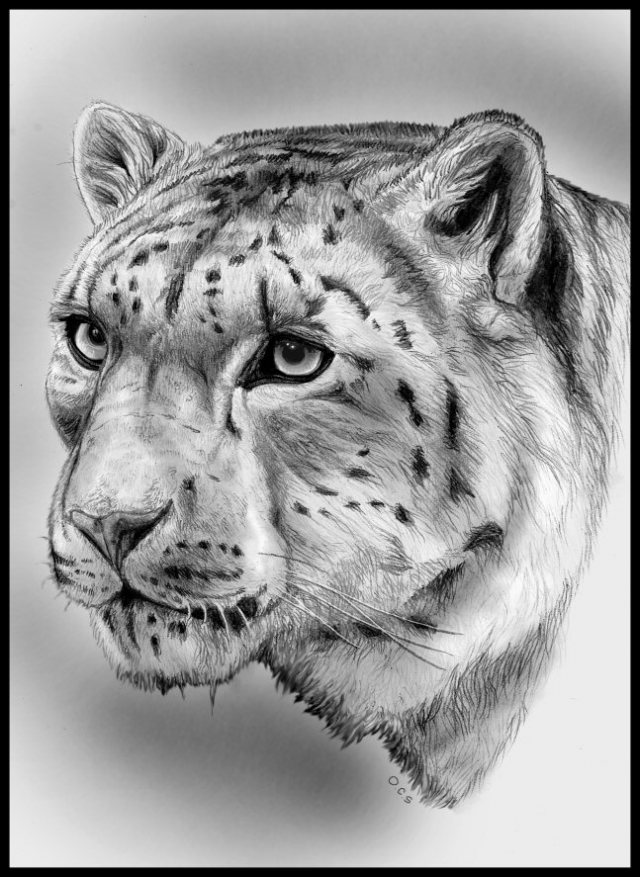 Animal-Pencil-Drawing-3 Stunningly And Incredibly Realistic Pencil Portraits