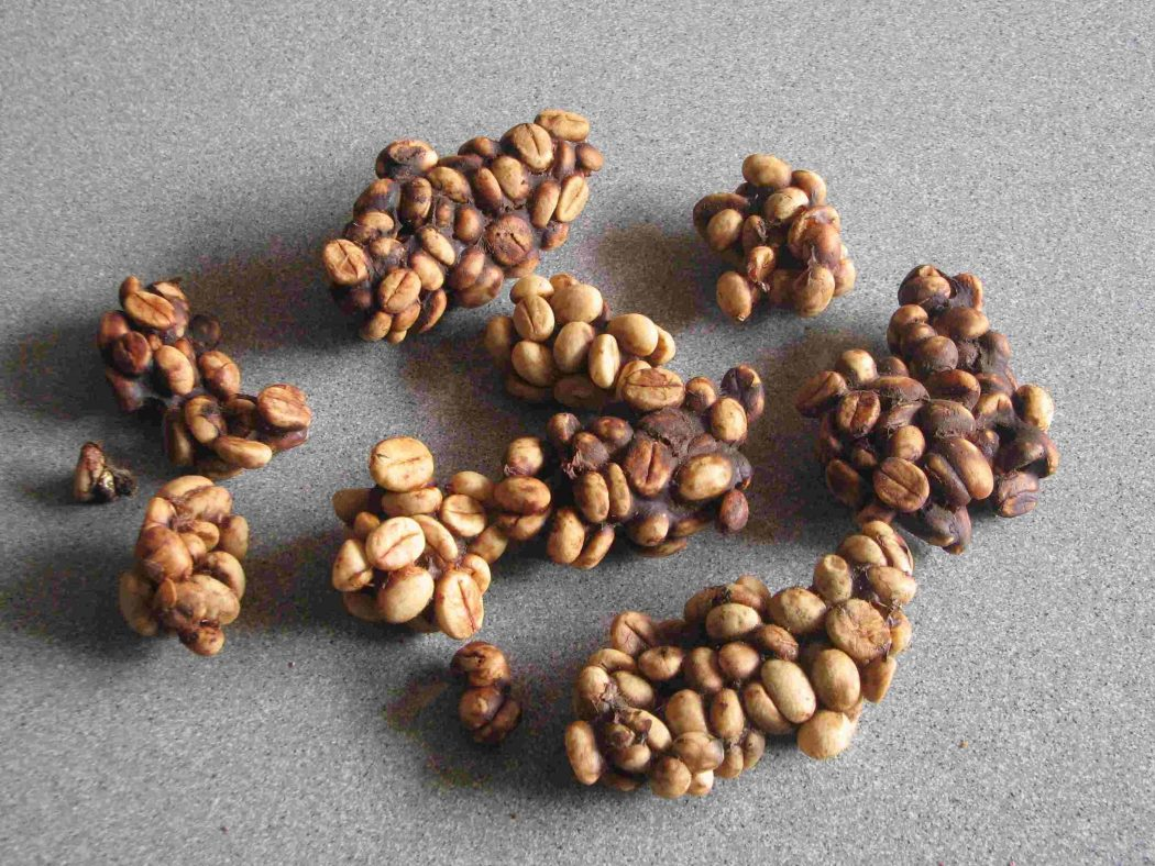 Kopi_Luwak_Indonesia_coffee_bean Why Most Expensive Coffee Taken from Animal Source?!