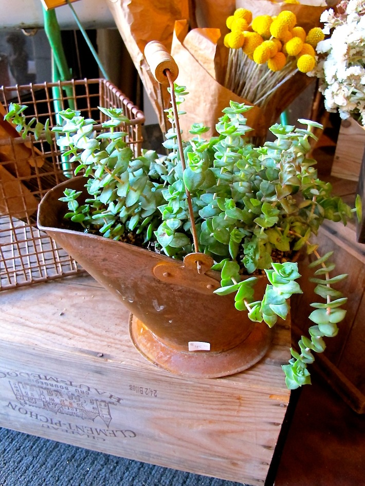 Watering-can-planter 10 Fascinating and Unique Ideas for Portable Gardens
