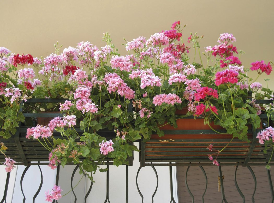 balcony-gardening 10 Fascinating and Unique Ideas for Portable Gardens