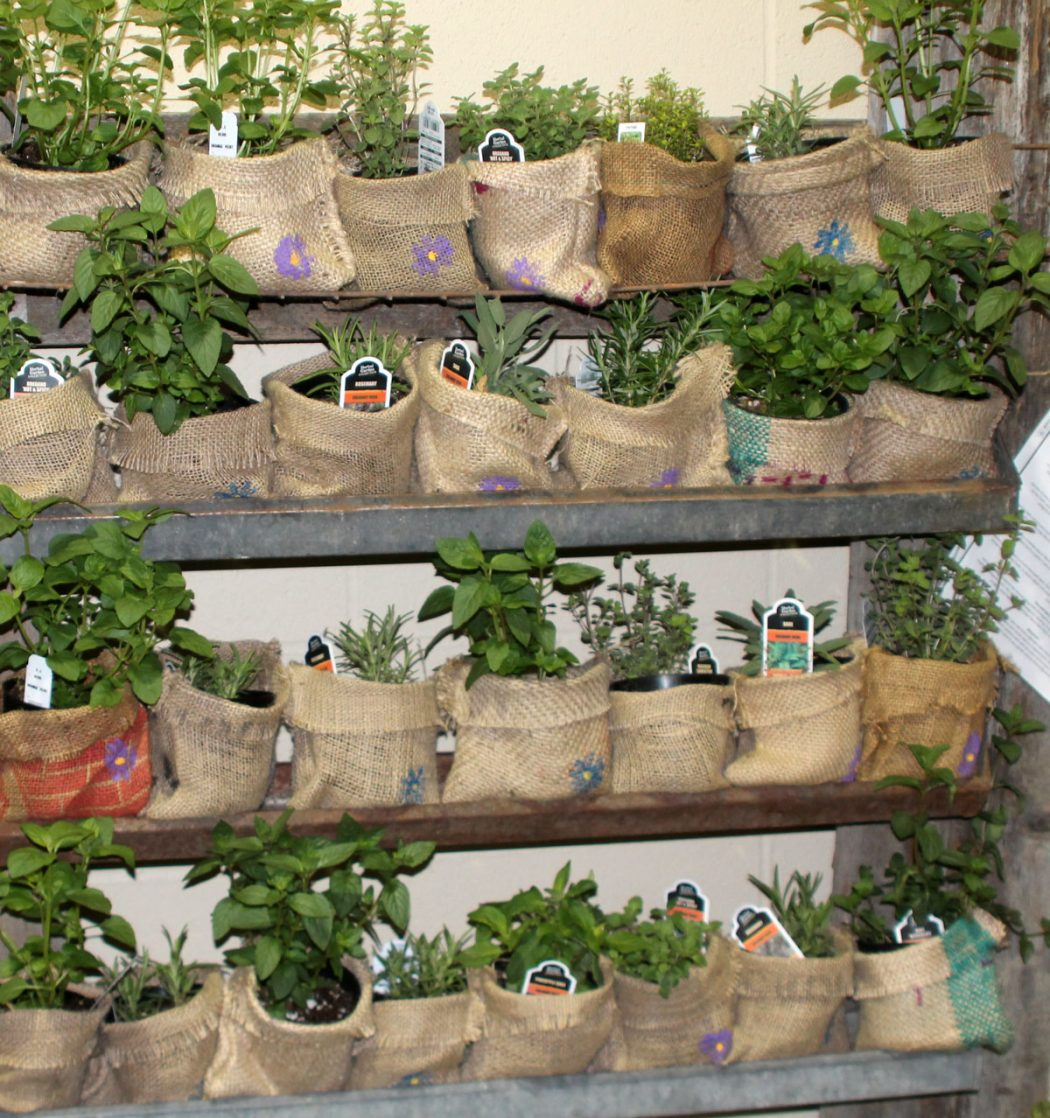 burlap-planters 10 Fascinating and Unique Ideas for Portable Gardens