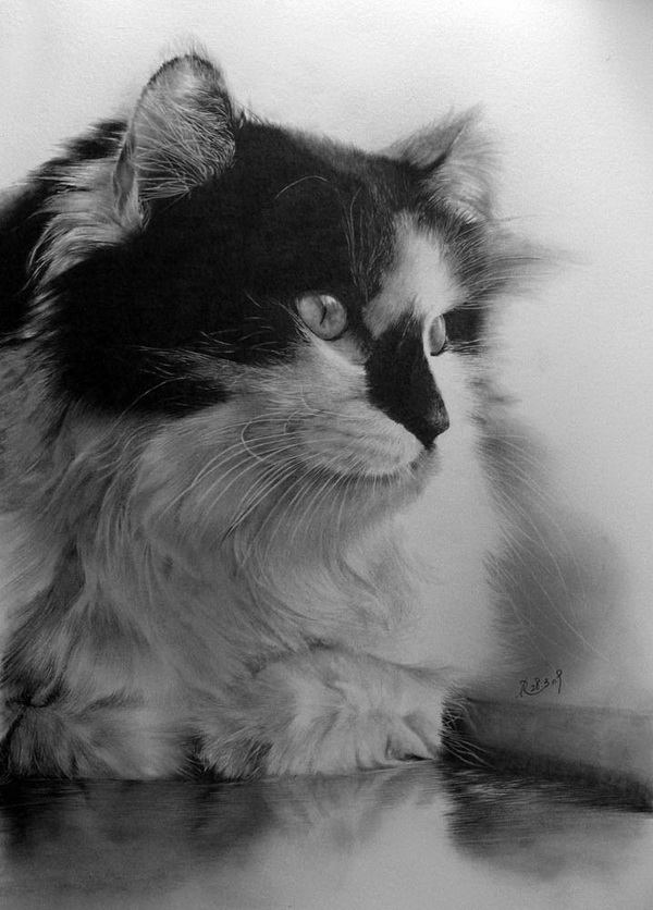 cat Stunningly And Incredibly Realistic Pencil Portraits