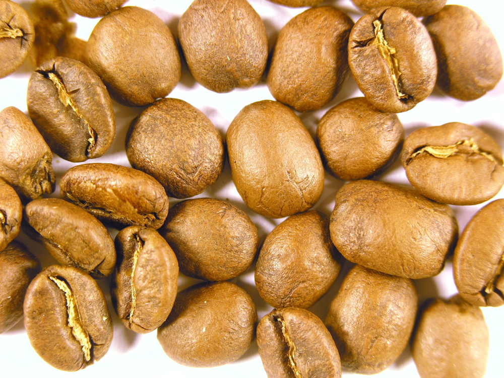 elsalvCOE9 Why Most Expensive Coffee Taken from Animal Source?!