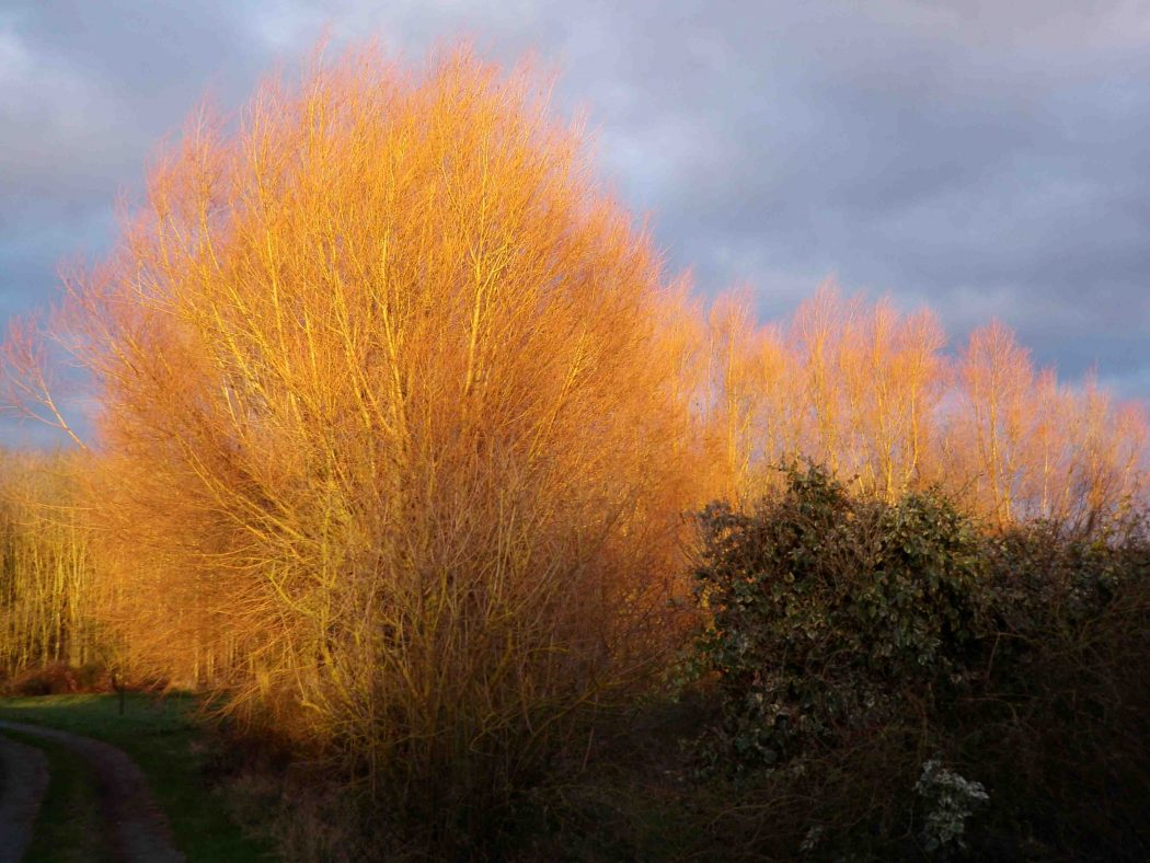 glowing-willows Make Your Own Garden Looks Glowing