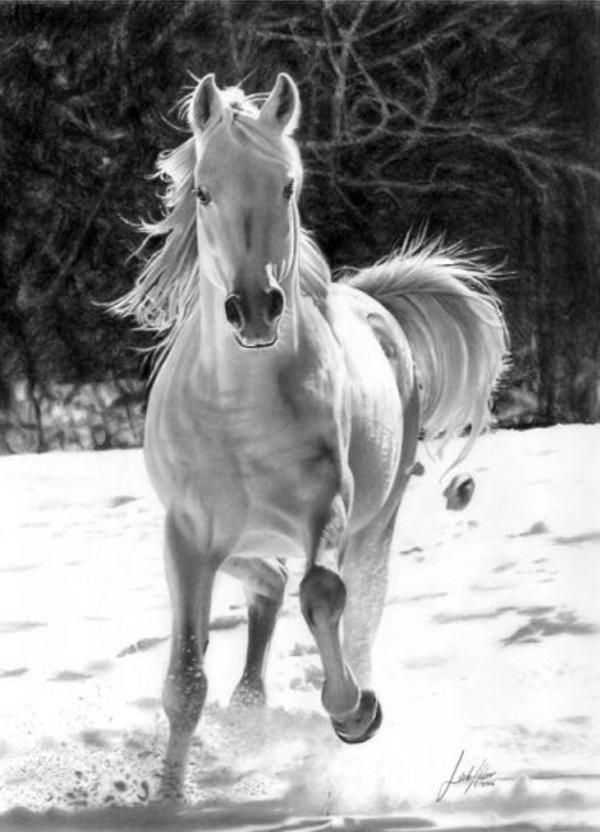 horse Stunningly And Incredibly Realistic Pencil Portraits