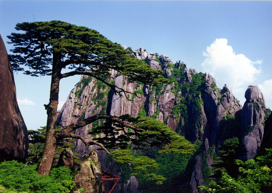 huangshan-pine-tree 18 Most Inspiring Landscapes In The World