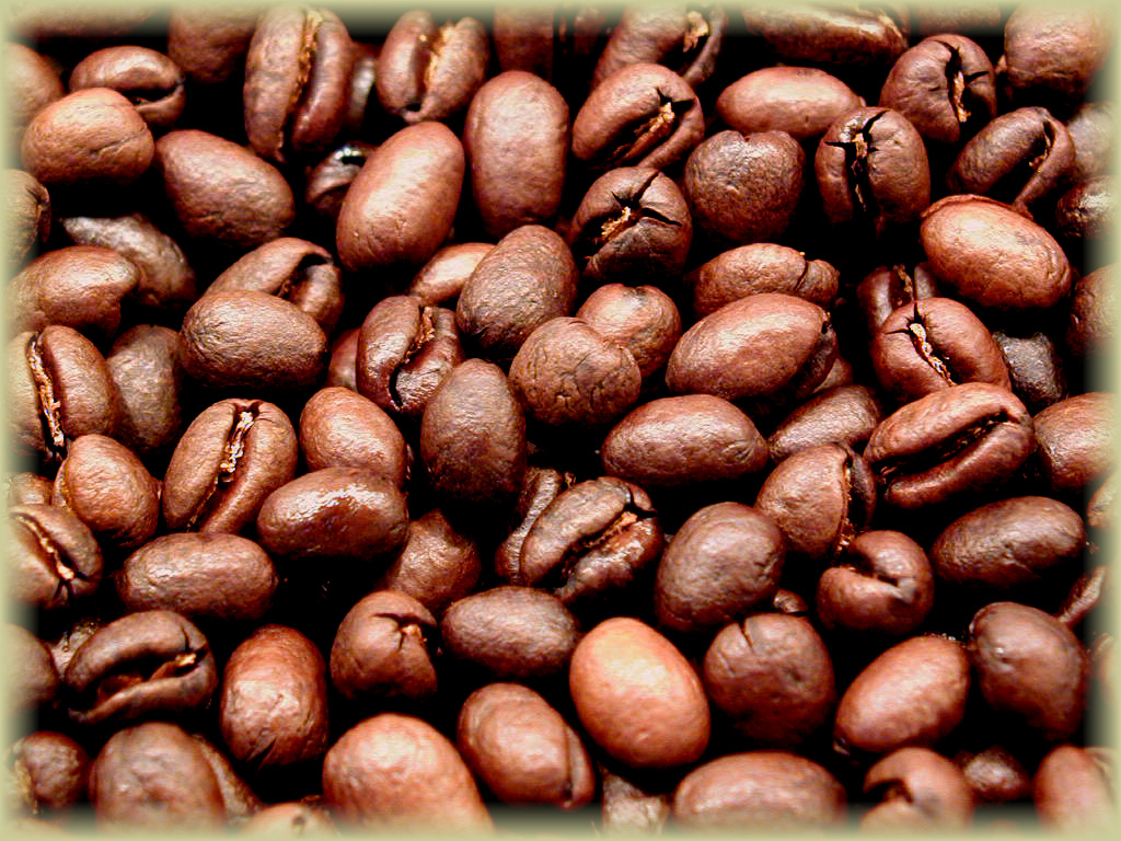 peaberry Why Most Expensive Coffee Taken from Animal Source?!