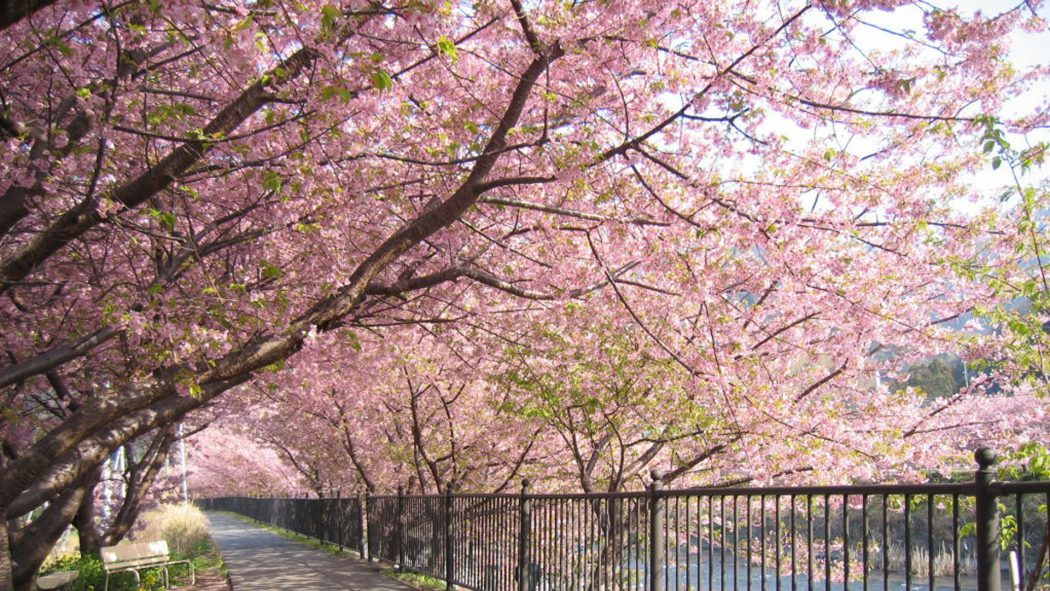 picture-expanse-of-cherry-blossoms-in-Japan Top 10 Most Expensive Cities in The World