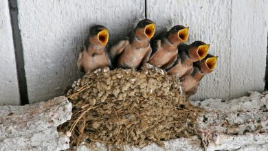 Photo of So You Decide To Breed Birds At Home?