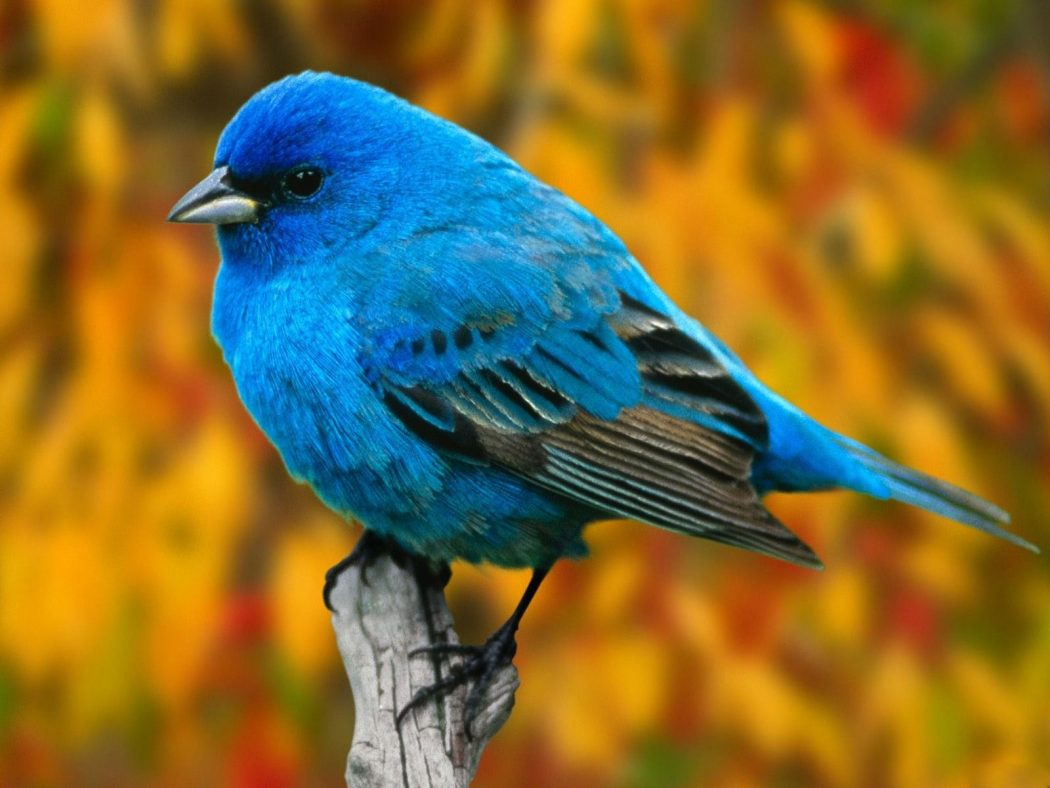 Beautiful-Birds-Wallpapers-15 So You Decide To Breed Birds At Home?