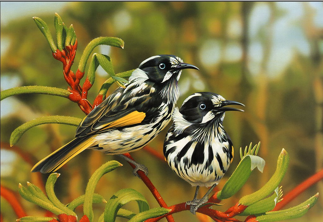 Beautiful-Birds-Wallpapers So You Decide To Breed Birds At Home?