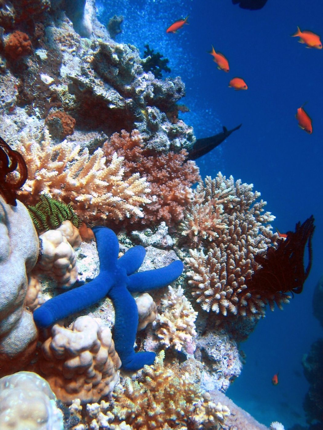 Great+barrier+reef+2 Top 10 Places to Visit Next Year!