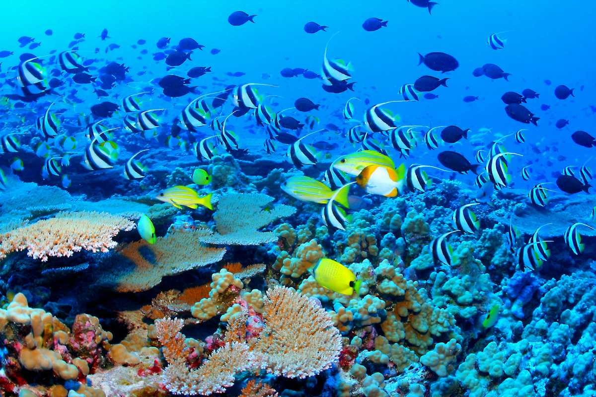 Great Barrier Reef Biodiversity Top 10 Places to Visit in 2014
