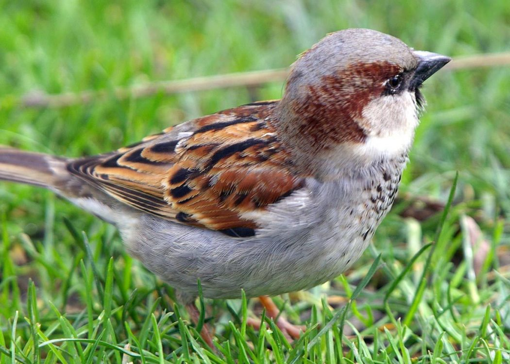 SPARROW-all-types-of-birds-21046851-1220-872 So You Decide To Breed Birds At Home?