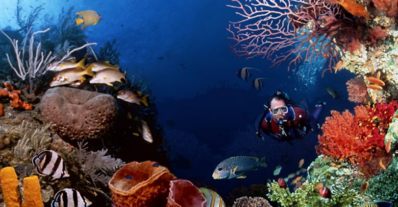 Photo of Scuba Diving Sport, You'll Find It Enjoyable..