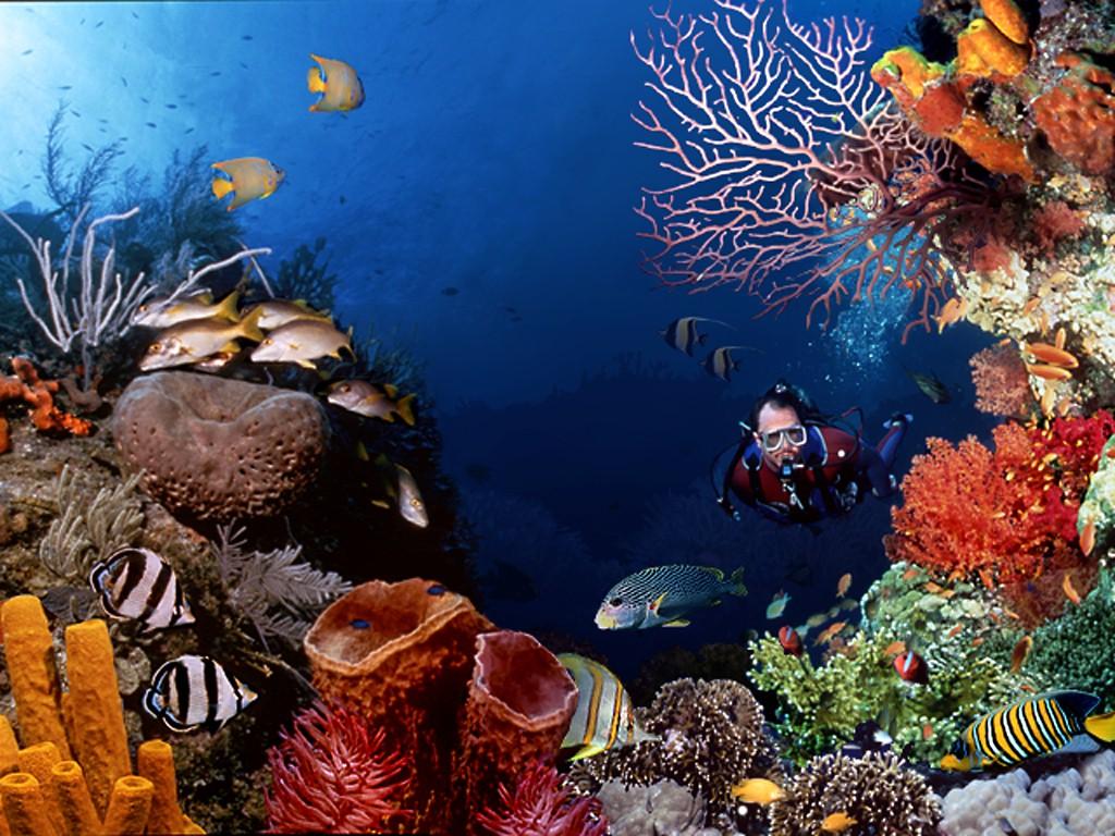 Scuba-Diving Scuba Diving Sport, You'll Find It Enjoyable..