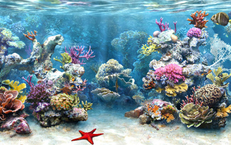 coral-475x299-1 6 Ways Of Treatment By Stones And Jewelry