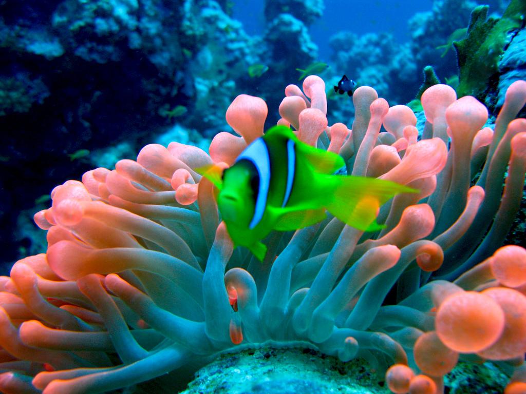 deep-in-the-sea Top 10 Most Luxurious Honeymoon Destinations