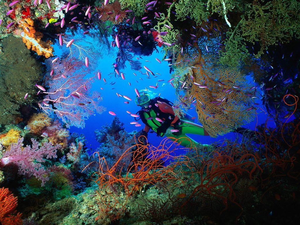 diving-blog-1 Scuba Diving Sport, You'll Find It Enjoyable..