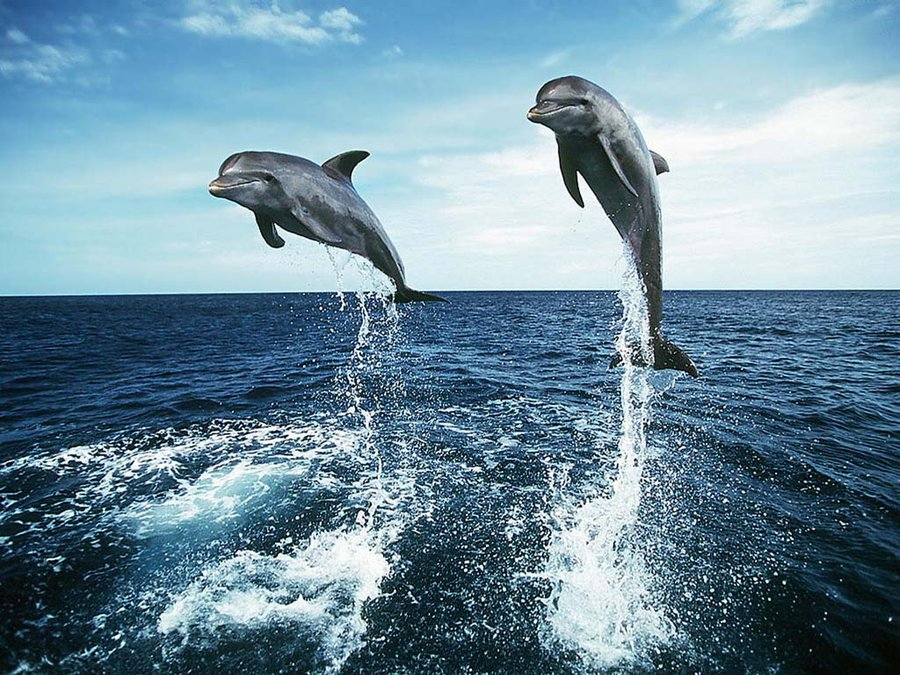 dolphens_in_the_bahamas_by_nikkirockz101-d32de2a Top 10 Places to Visit Next Year!