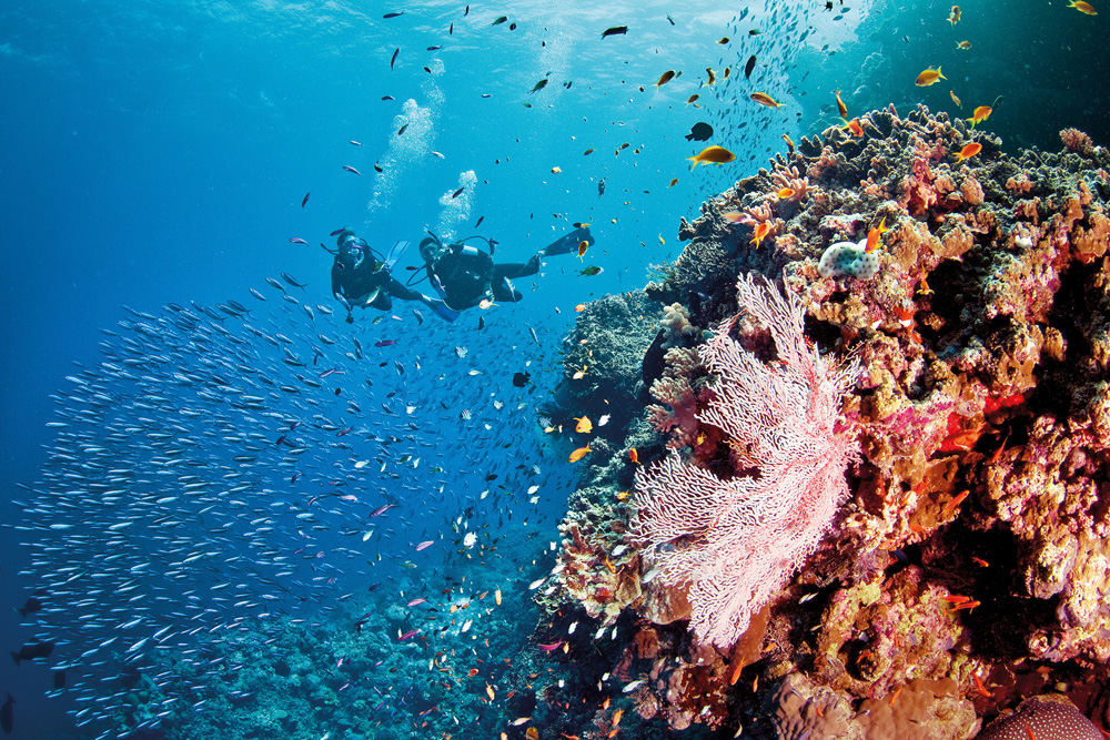 liveaboard diving the great barrier reef