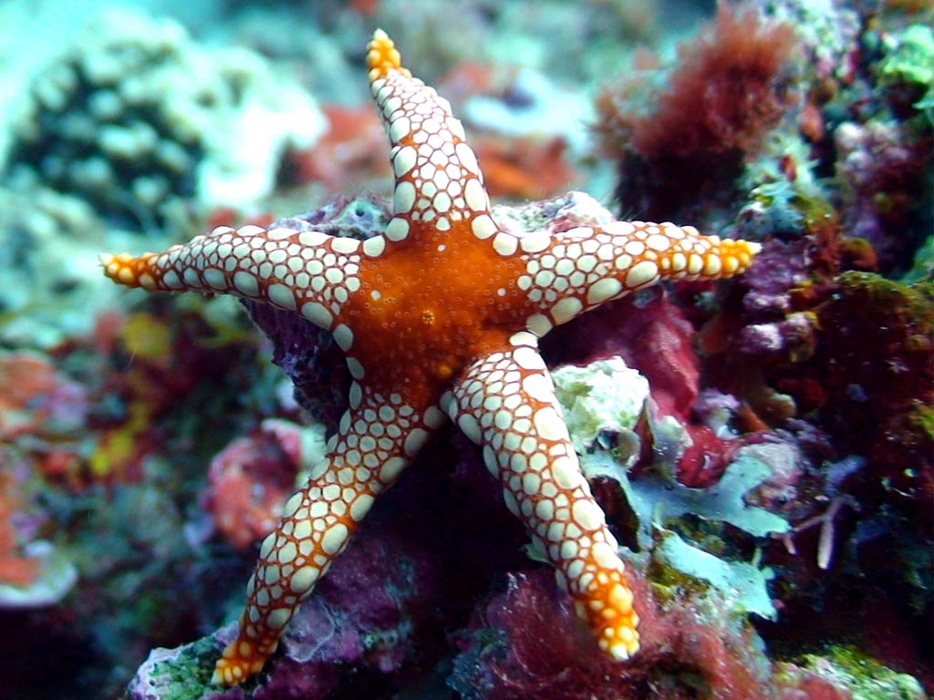 marsa-alam-diving Scuba Diving Sport, You'll Find It Enjoyable..