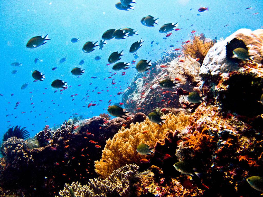 scuba-diving3 Scuba Diving Sport, You'll Find It Enjoyable..