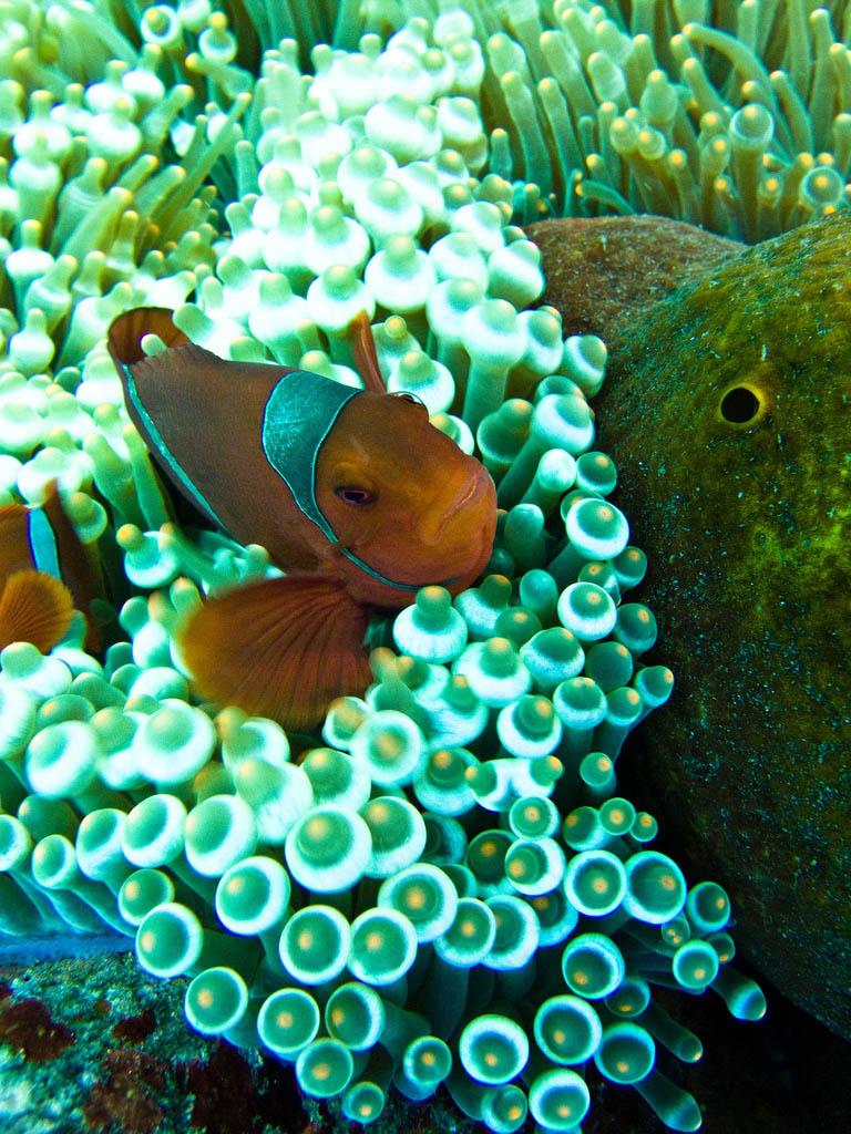 scuba-diving4 Scuba Diving Sport, You'll Find It Enjoyable..
