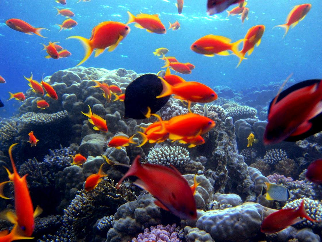 sharm2 Scuba Diving Sport, You'll Find It Enjoyable..