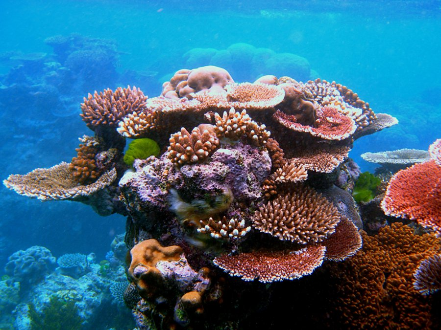 snorkel-at-australias-great-barrier-reef Top 10 Places to Visit Next Year!