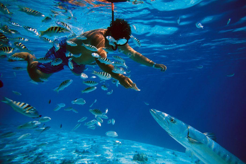 tahiti_barracuda_hand-feed Top 10 Most Luxurious Honeymoon Destinations