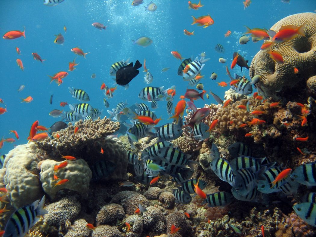 thailand-diving6 Scuba Diving Sport, You'll Find It Enjoyable..