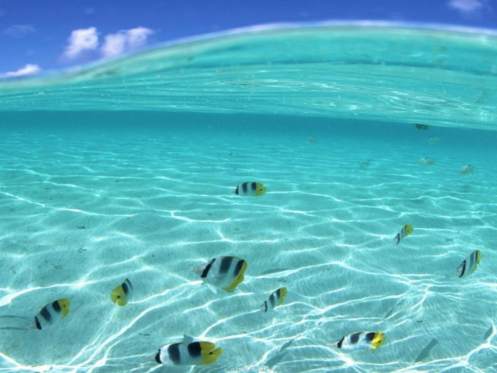 underwater-fish-in-hawaii-hawaii-dermatology Top 10 Most Luxurious Honeymoon Destinations